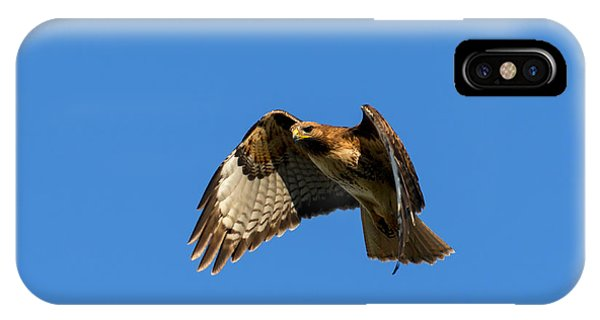 Red Tail Hawk iPhone Case - Red-tail Hover by Mike  Dawson