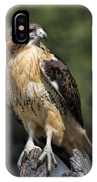 Red Tail Hawk iPhone Case - Red Tailed Hawk by Dale Kincaid
