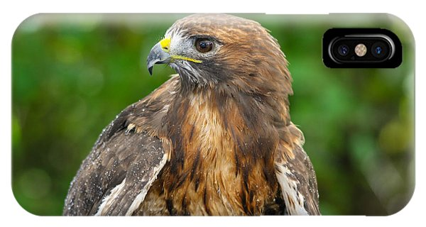 Red-tailed Hawk Close-up IPhone Case