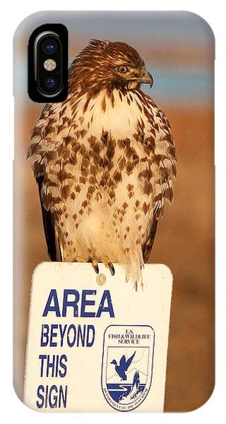 Red Tailed Hawk Lower Klamath National Wildlife Refuge Northern California IPhone Case
