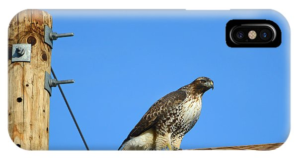 Red-tailed Hawk On A Power Pole IPhone Case