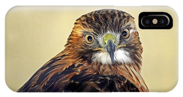 Red Tailed Hawk Portrait #2 IPhone Case