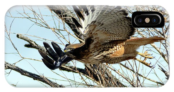 Red Tailed Hawk Sequence #1 IPhone Case