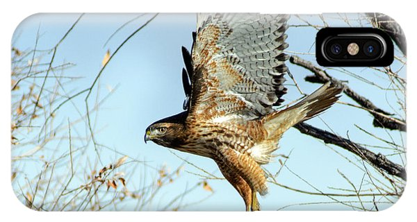 Red Tailed Hawk Sequence #2 IPhone Case