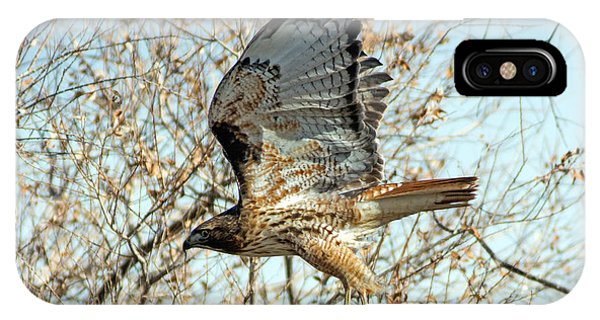 Red Tailed Hawk Sequence #3 IPhone Case