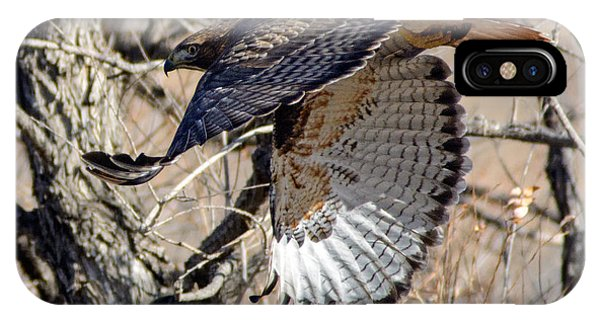 Red Tailed Hawk Sequence #4 IPhone Case