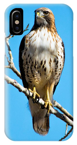 Red Tailed Hawk Standing Tall IPhone Case