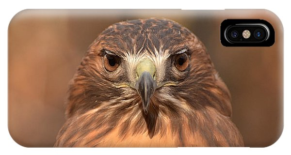 Red-tailed Hawk Stare Phone Case by Nancy Landry