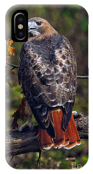 Red Tail Hawk iPhone Case - Red Tailed Hawk by Todd Bielby