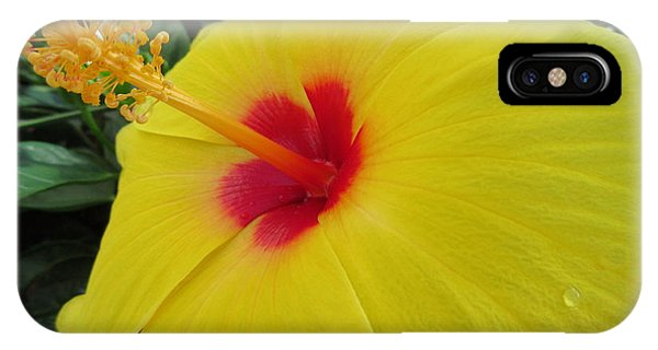 Red Throat With Dew Drops IPhone Case