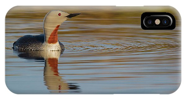 Loon iPhone Case - Red-throated Loon by Ken Archer
