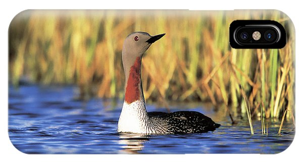 Red-throated Loon IPhone Case