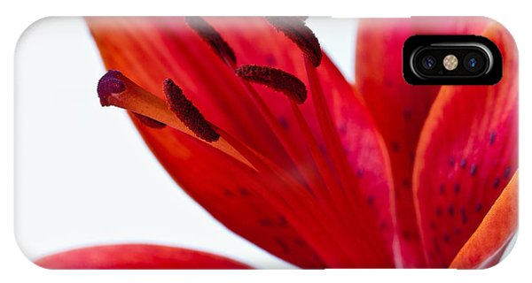 Red Tiger Lily IPhone Case