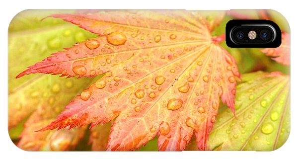 Red Tip Leaf IPhone Case