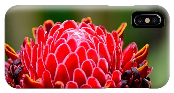 Red Torch Ginger Flower Head From Tropics Singapore IPhone Case