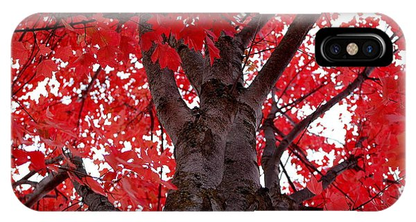 Red Tree Of Autumn IPhone Case