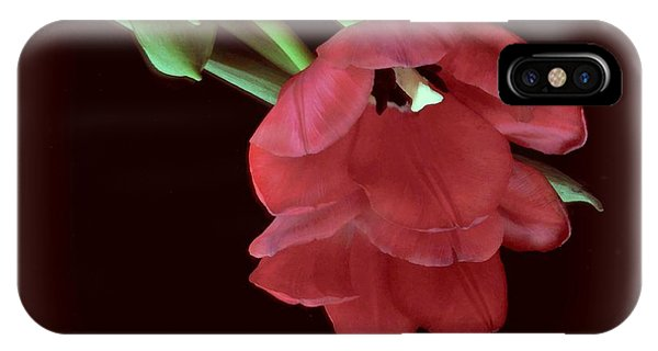 Red Tulip On Burgundy IPhone Case