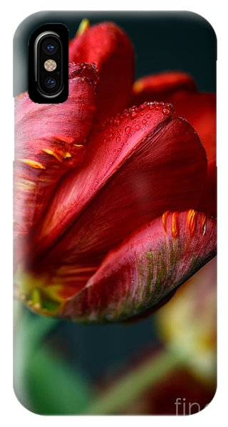 Tulip iPhone X / XS Case - Red Tulip With Dew by Nailia Schwarz