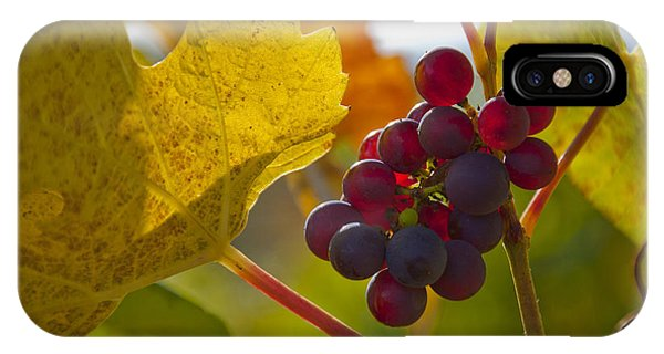 Red Wine Grapes IPhone Case
