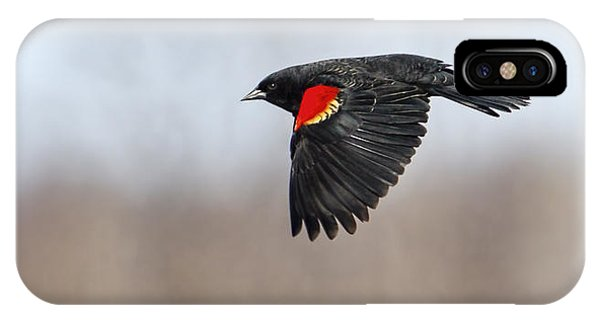 Red-winged Blackbird In Flight IPhone Case