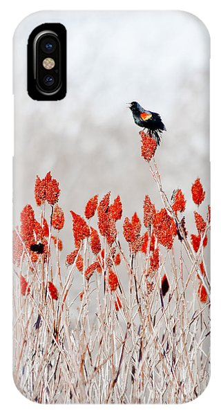 Red Winged Blackbird On Sumac IPhone Case