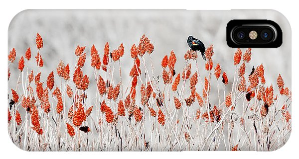 Red-winged Blackbird IPhone Case