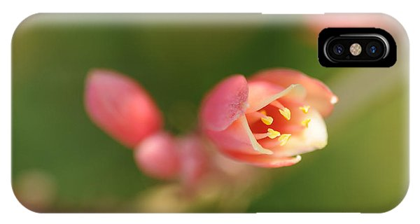 Red Yucca Flower IPhone Case
