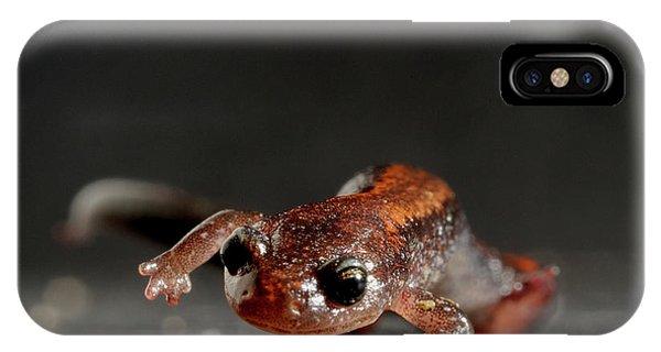 Salamanders iPhone Case - Redback Salamander Plethodon Cinereus by Aaron Ansarov