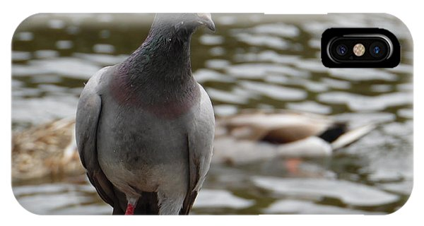 Redclaws The Pigeon Posing IPhone Case