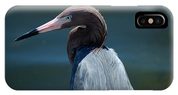 Reddish Egret 3 IPhone Case