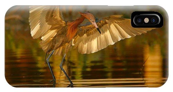 Reddish Egret In Golden Sunlight IPhone Case