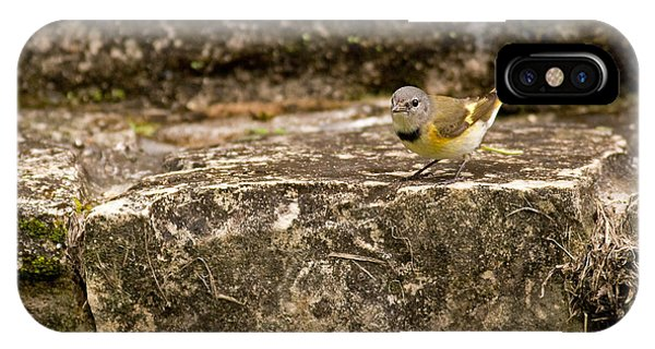 Redstart In Ruins IPhone Case