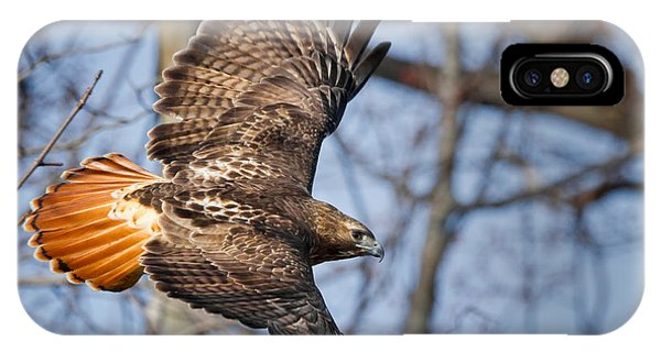 Red Tail Hawk iPhone Case - Redtail Hawk by Bill Wakeley