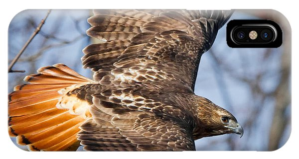 Redtail Hawk Square IPhone Case
