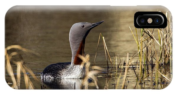 Redthroated Loon IPhone Case
