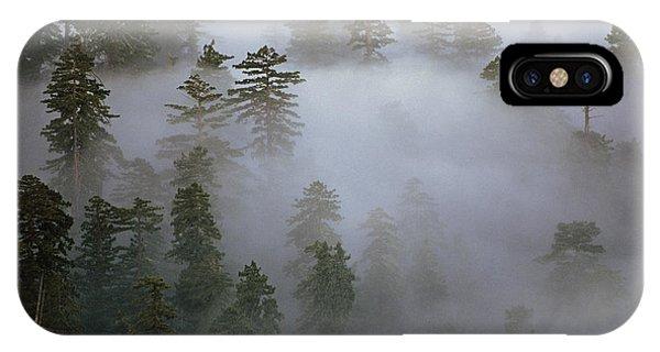 Redwood Creek Overlook With Giant Redwoods  IPhone Case