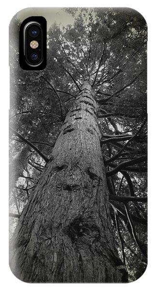 Redwood Tree IPhone Case