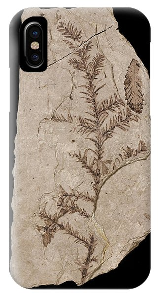 North London iPhone Case - Redwood Tree (sequoia Affinis) Fossil by Natural History Museum, London/science Photo Library