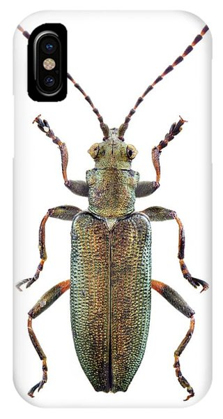 Coleoptera iPhone Case - Reed Beetle by F. Martinez Clavel