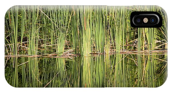 Reeds Of Reflection IPhone Case