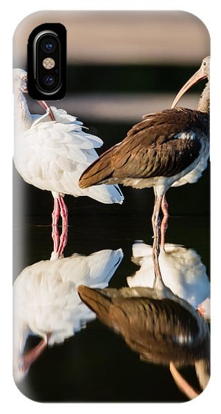 Reflection Of Two Young Ibis IPhone Case