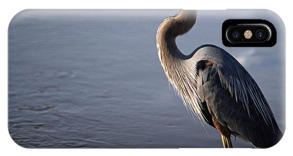 Regal Bird IPhone Case