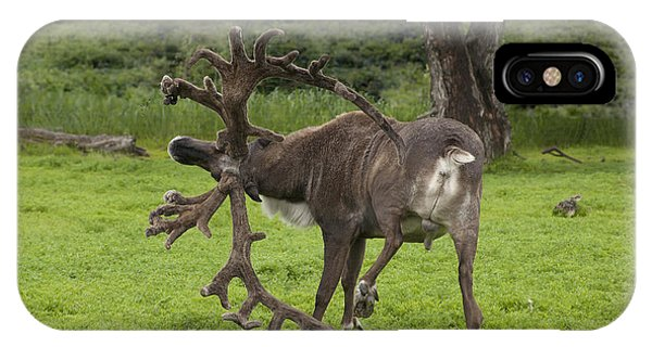 Reindeer With A Big Rack IPhone Case