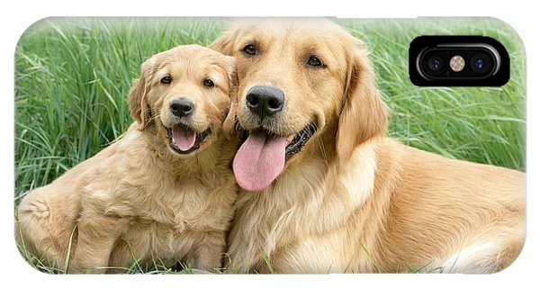 Golden iPhone Case - Relaxing Retrievers by MGL Meiklejohn Graphics Licensing