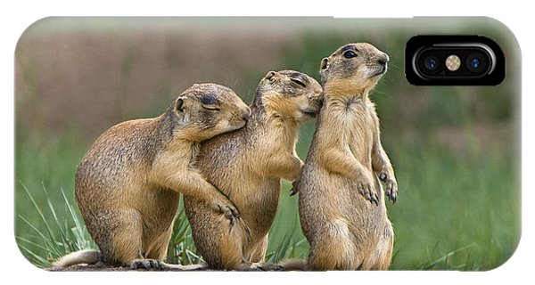 IPhone Case featuring the photograph Relaxing Utah Prairie Dogs Cynomys Parvidens Wild Utah by Dave Welling