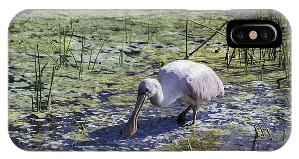 Reseate Spoonbill Vi IPhone Case
