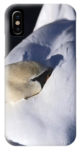 Resting Mute Swan IPhone Case