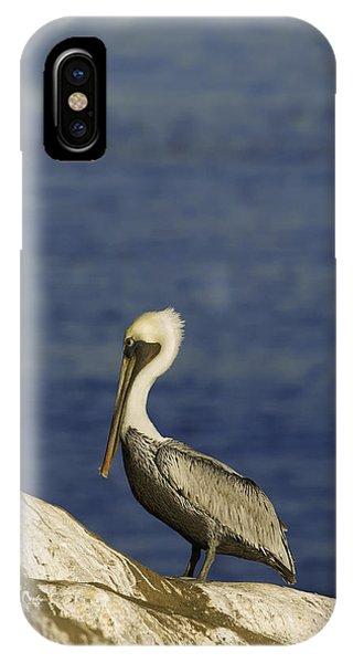 Resting Pelican IPhone Case