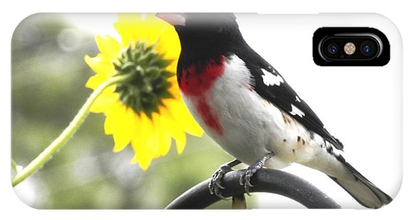 Resting Rose Breasted Grosbeak IPhone Case