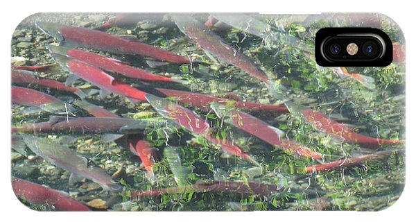 Returning Salmon IPhone Case